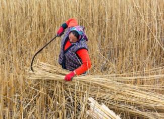 Fotografía desoladora de la violencia de género en el mundo rural