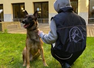 Perros que salvan la vida a mujeres maltratadas