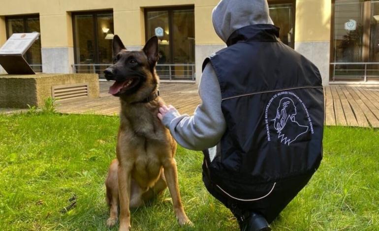 perros-que-salvan-la-vida-a-mujeres-maltratadas